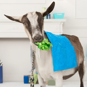 Plan Gifts of Hope goat